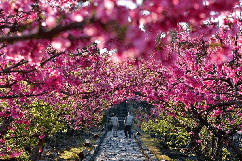 Festival Bunga Sakura