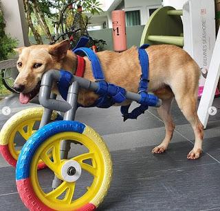 harith iskander bela anjing kudung
