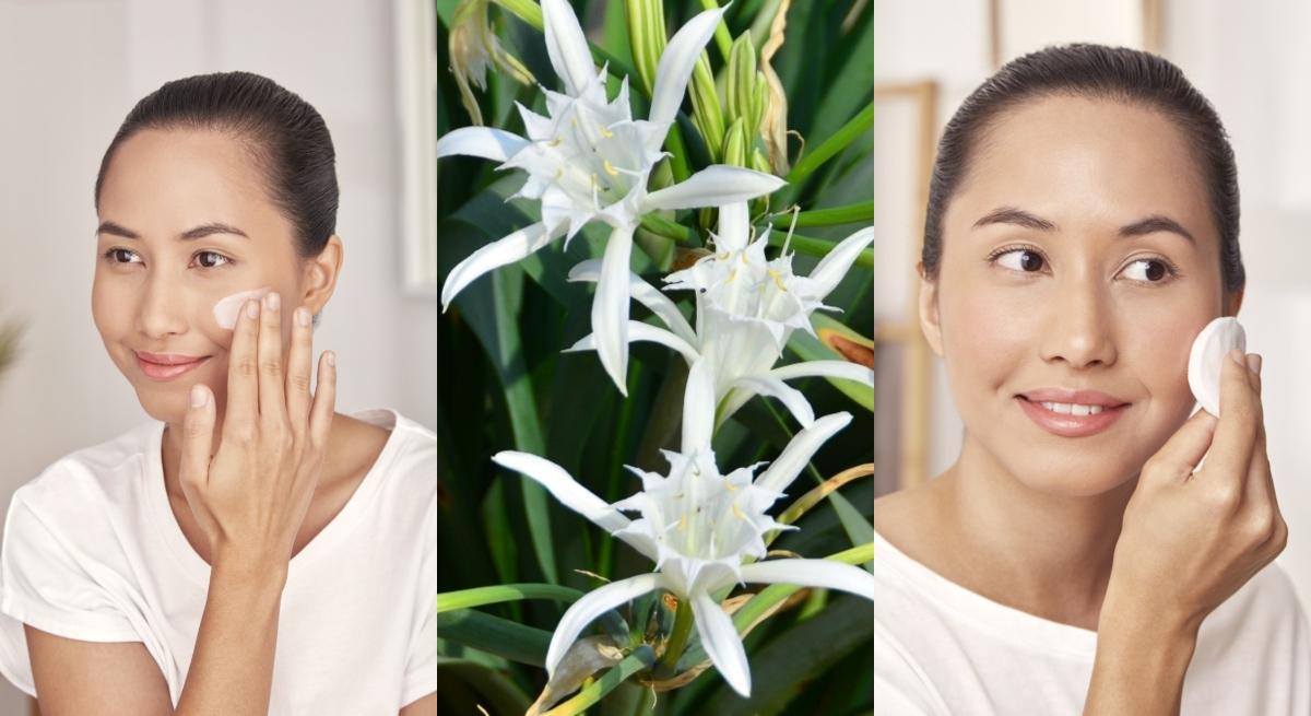 cetaphil white sea daffodil