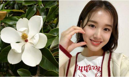 Magnolia putih bantu kulit jadi lebih glowing
